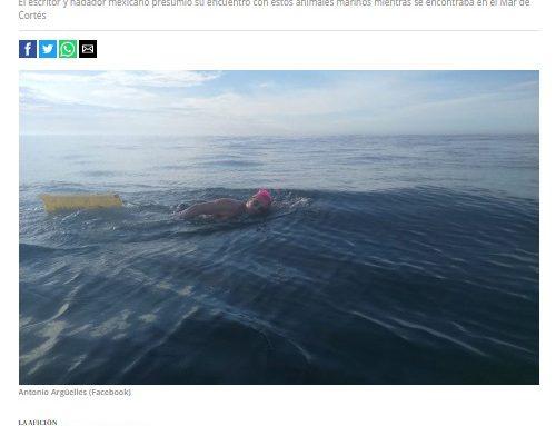 Así quedó el nadador Antonio Argüelles tras ser atacado por medusas